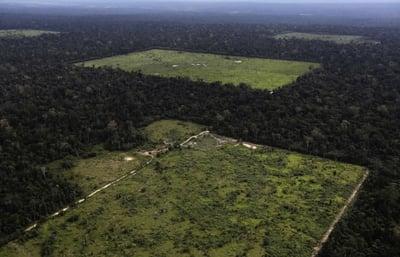 Amazon rain forest _aerial