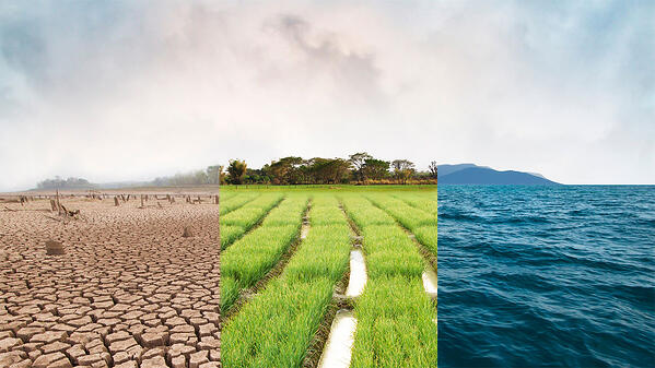 Image divided into thirds. Left image is a sandy desert, center image is patches of greenery with trees in background, right image is deep blue ocean.