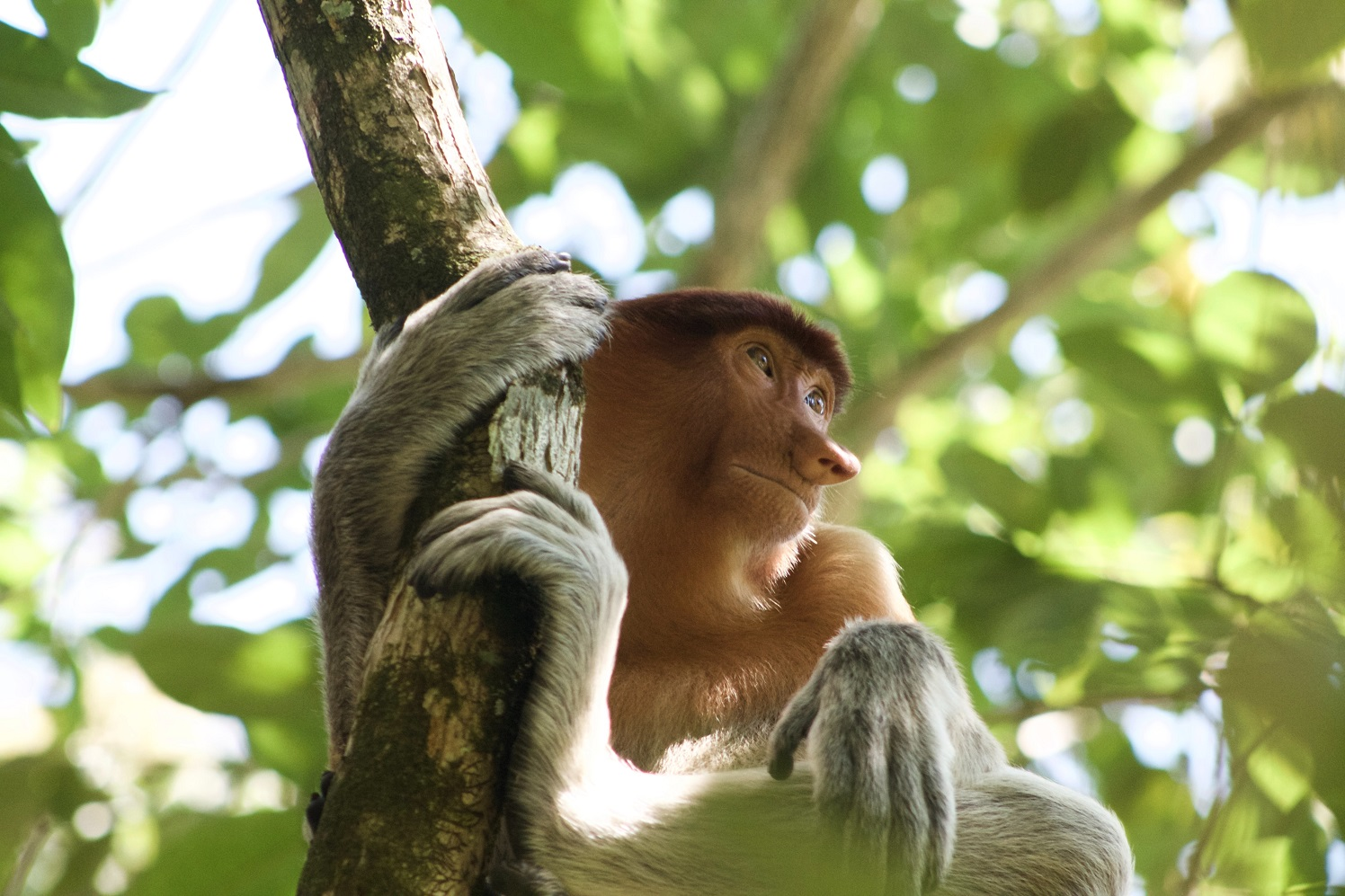 Bako National Park, Kuching, Malaysia. joshua-stitt-_HV9JRENahE-unsplash